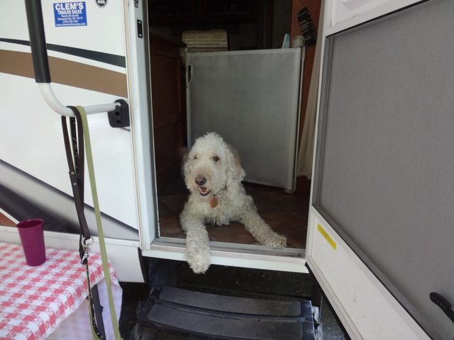 Dog baby gate in camper